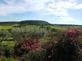 apd04smo1-vue panoramique depuis la terrasse