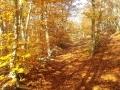 apd04lim1 - la haute provence en automne