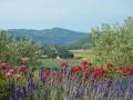 apd04smo1-vacances au soleil de provence