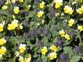 apd05dra - fleurs de montagne
